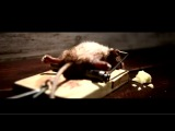 Мышка (Самая прикольная и необычная реклама Мира).mp4